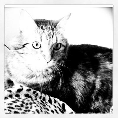 Goobie Kitty