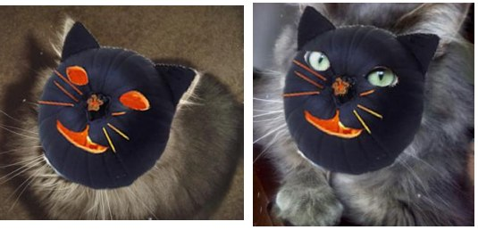 abby the maine coon wearing a halloween mask