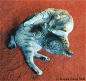 american bobtail mom cat and baby kitten