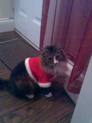 In his Xmas jacket, which he wasn't too thrilled with!