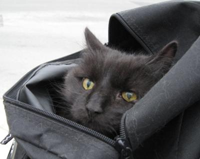 black cat in a bag