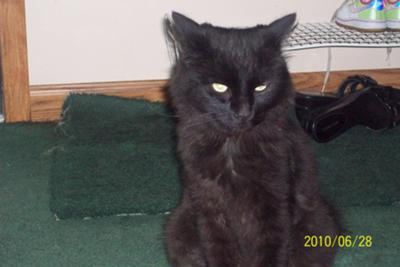 Black Smoke Cat