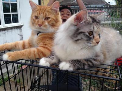 Boboi and Gerl