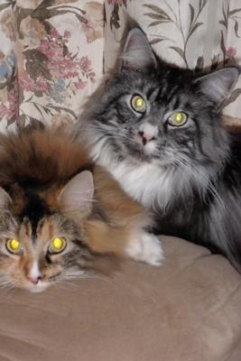Boone and Calli