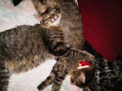 Brady and Luna