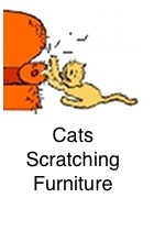Furniture Scratching Problems