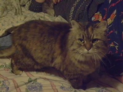Amanda's Cat