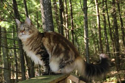 how to stop cats from spraying outside