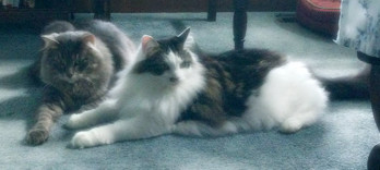 Delilah & Samson