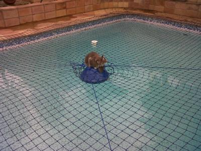 Molly in the Swimming Pool
