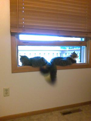 Eric and Chloe in the window