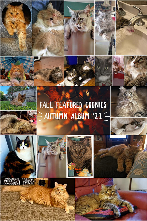 fall maine coon photo album collage
