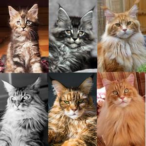 February Cats