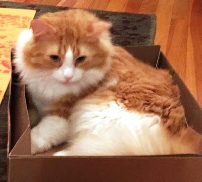 Figaro in a box--