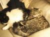 Fluffy & Priscilla