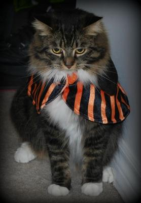 Fluffy's Halloween Costume