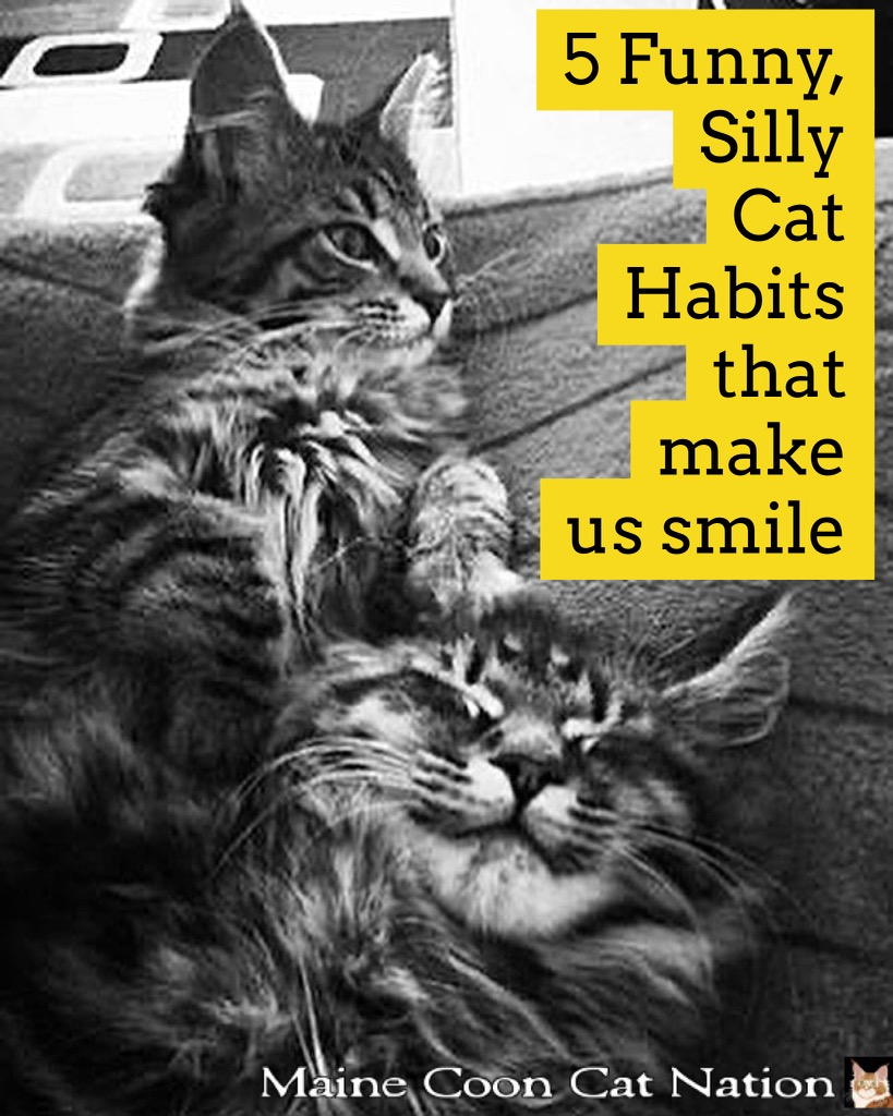 5 Funny, Silly Cat Habits That Make Us Smile