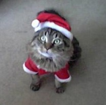 gizmo dressed for christmas