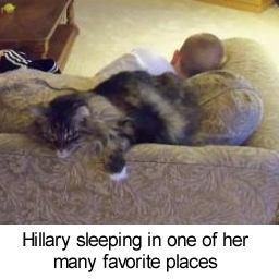 hillary sleeping