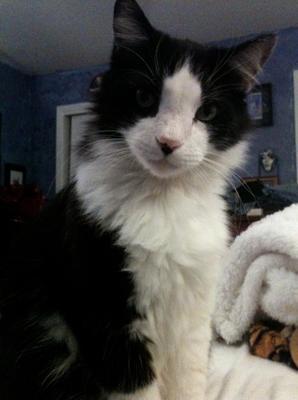 April 2013 Maine Coon Cat Pictures