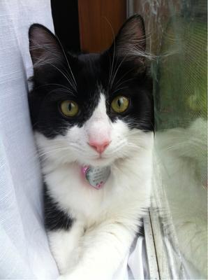 Kira Kitty