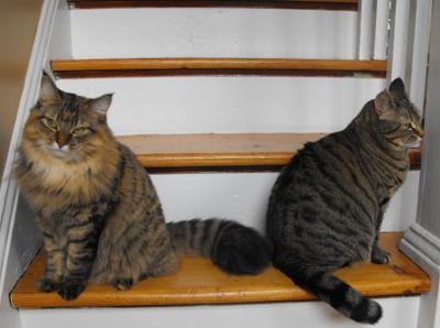 Lily & Lulu
