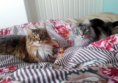 Loki & Libby