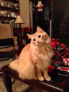 Louie posing for his Christmas picture