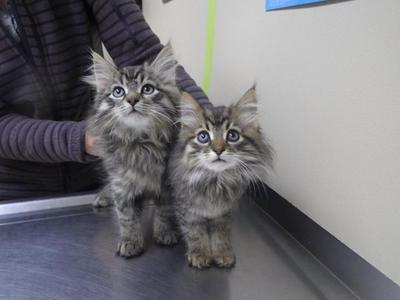 Luca and Beppino at their first vet check.