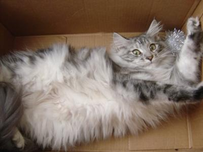 Just chillin like a villian