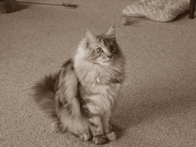 I know I am pretty