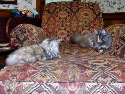 Maggie & Phoebe