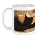 maine-coon-kittens-mug