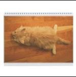 maine-coon-kittens-calendar
