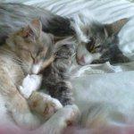 two sleeping kitties cuddling