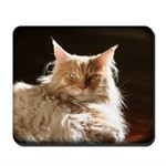 maine-coon-cat-mousepad