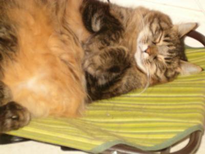 mandy the cat sleeping