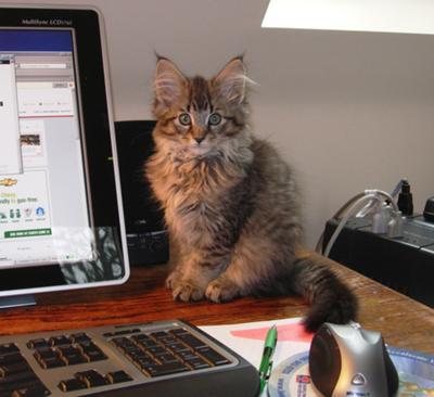 Marley Kitten