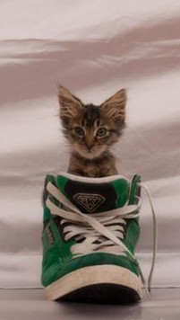 mike patton, kitten in shoe