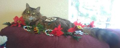 Deck the Halls With Boughs of Moggie