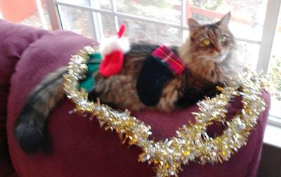 Decorating Moggie