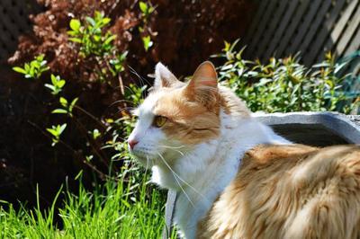 Pretty cat :)