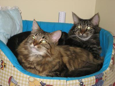 Mylla and Hugo