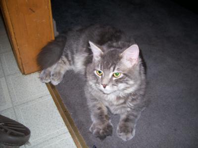 Nicole's Cat
