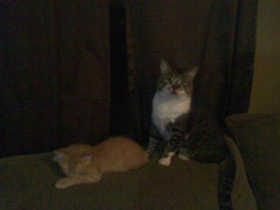Otis and Oscar