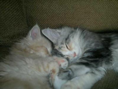 Poppy & Alfie