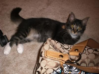 Rockie playing with the purse, 07.26.11