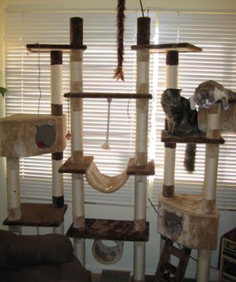 Rome Cat Tree