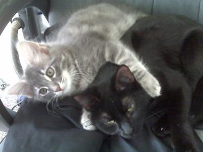 Salem and Puff