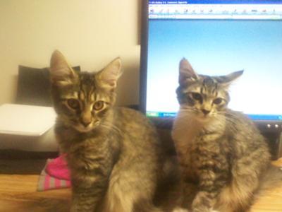 two cute kittens